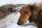 Порода собак тазы - описание, характер, характеристика, фото тазы и видео, цена Казахской борзой