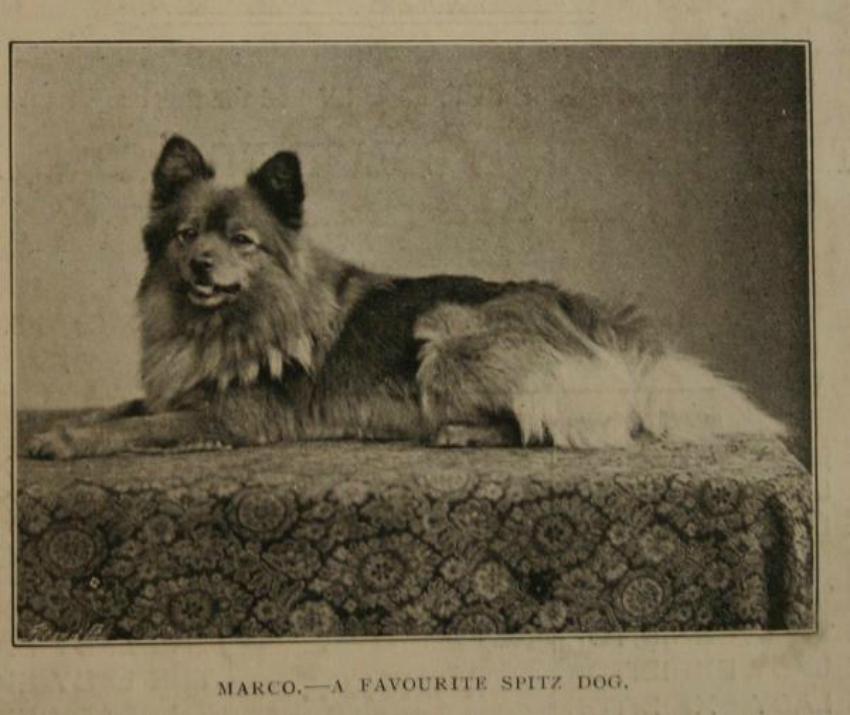 Queen Victoria's Marco