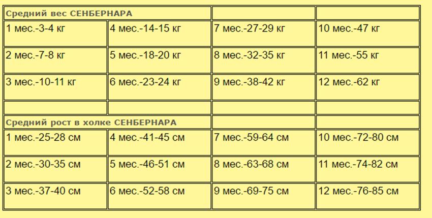 Таблица роста и веса сенбернаров