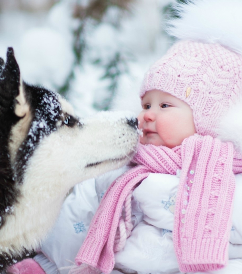 Порода Сибирских хаски - описание и характеристики, на фото  собака хаски с малышом