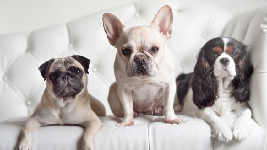 Смежные породы собак