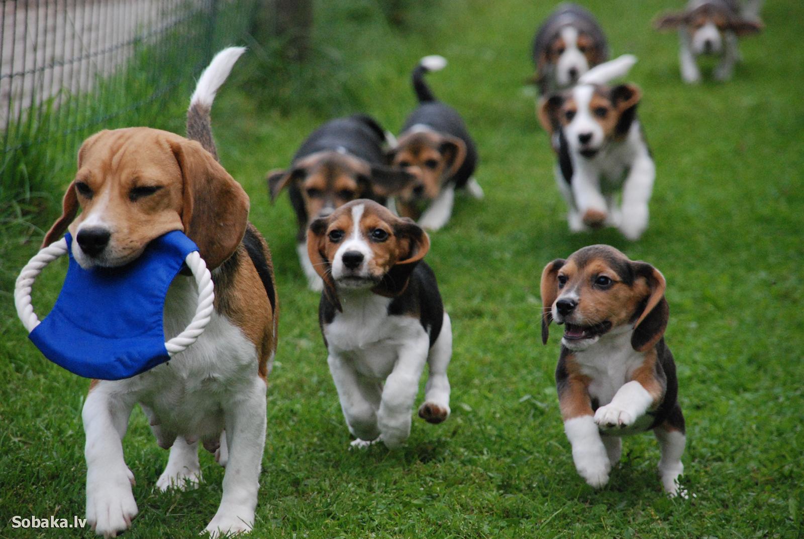 Одежда для собак породы