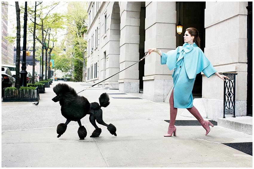 Прогулка с пуделем - сколько надо гулять с собакой