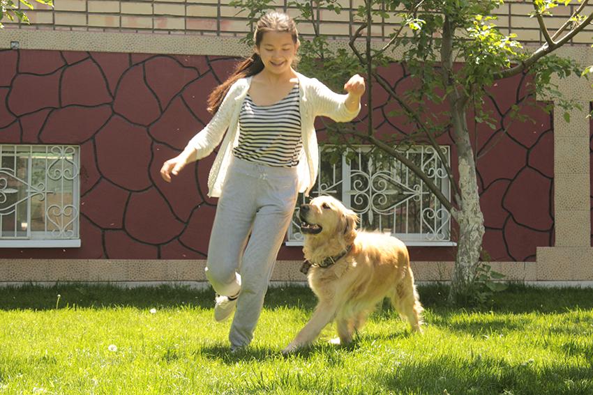 воспитание золотистых ретриверов, обучение и дрессировка собак