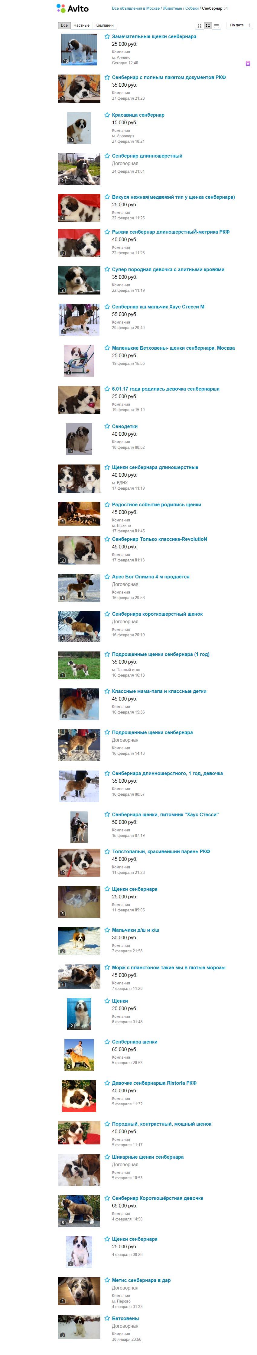 Продажа щенков сенбернаров в Москве - стоимость