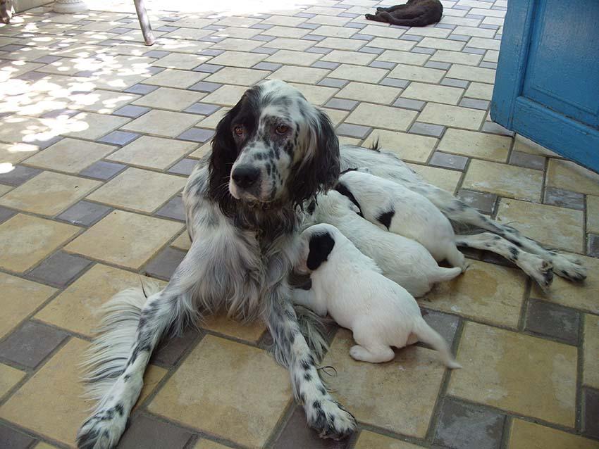 Мама с малышами
