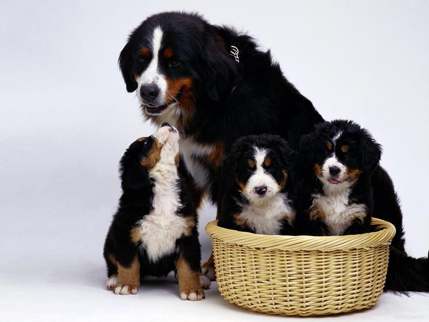 с щенками
