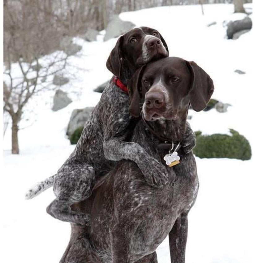 Мама с щенком