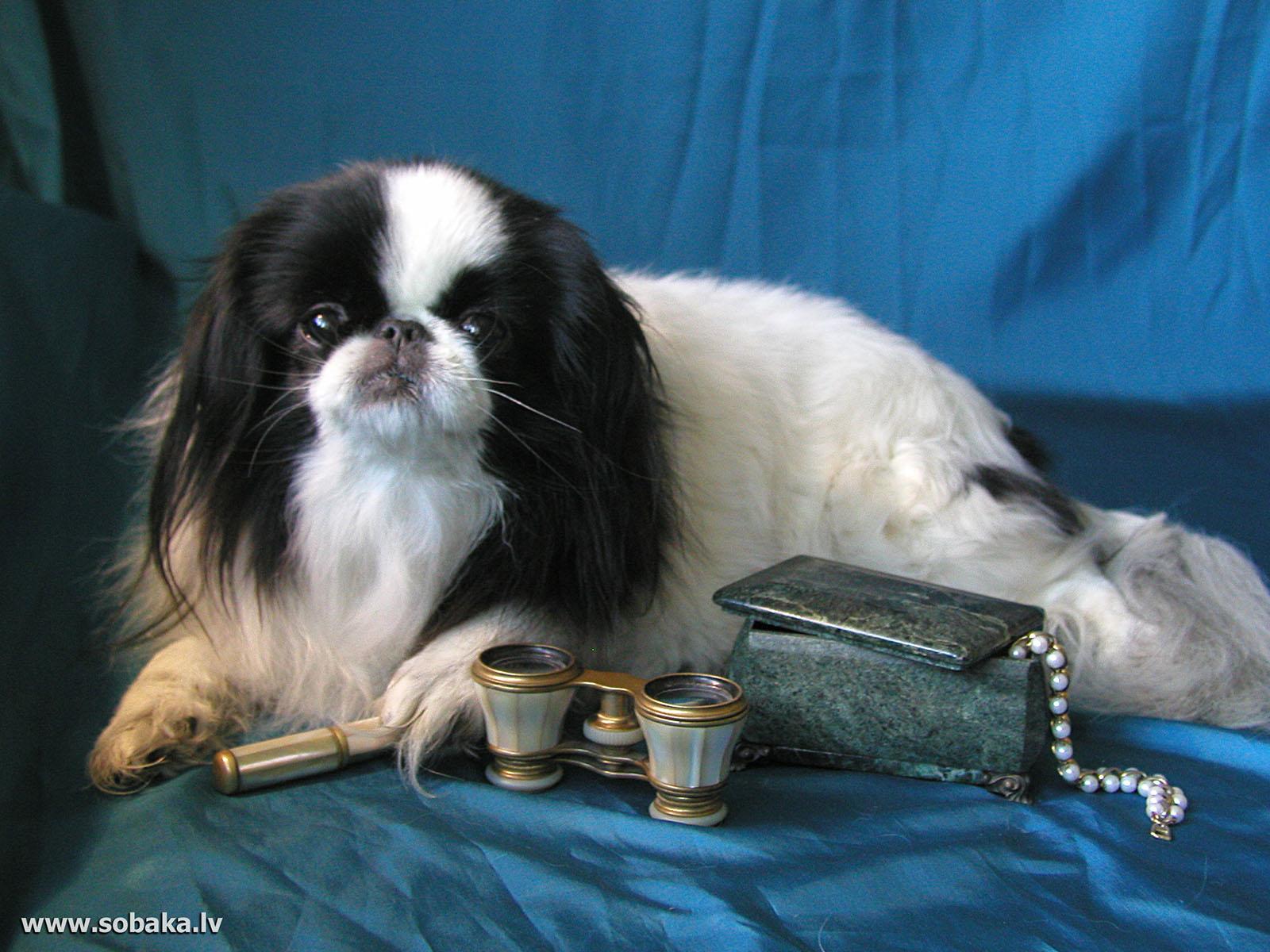 Картинки собак хины