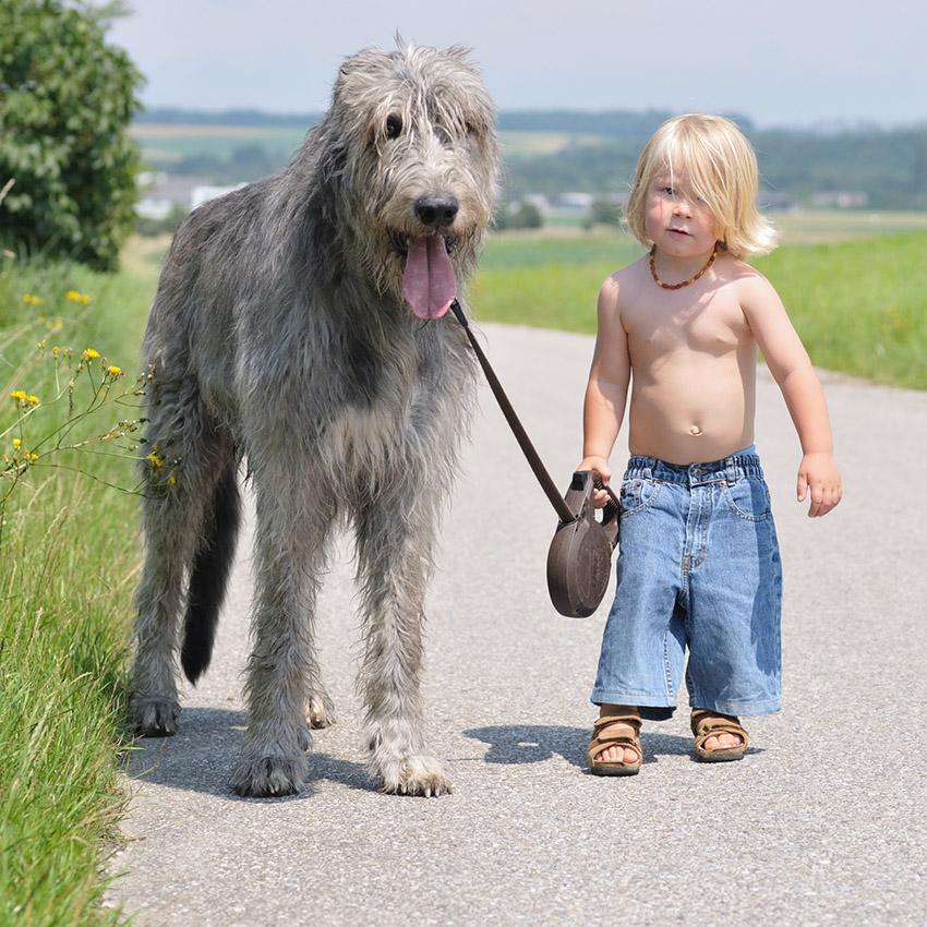 ребенок и ирландский волкодав