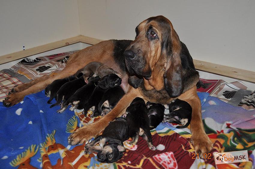 Фото мамы с щенками