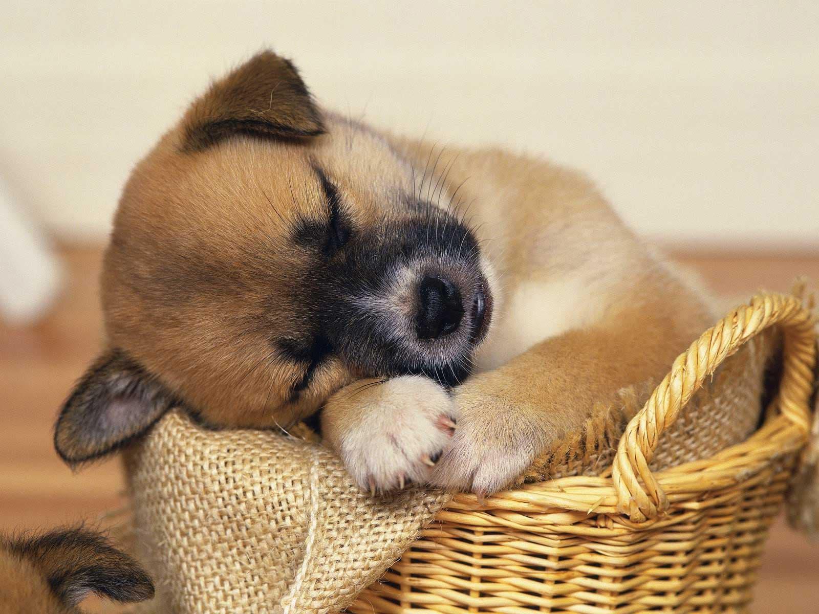 печеньку пополам щенки фото забавные помощью можно