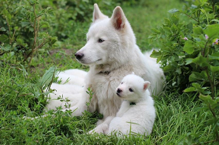 Мама и щенок