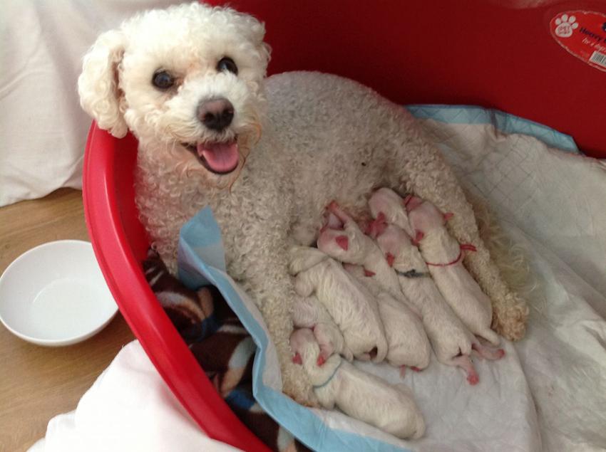 Мама с щенками