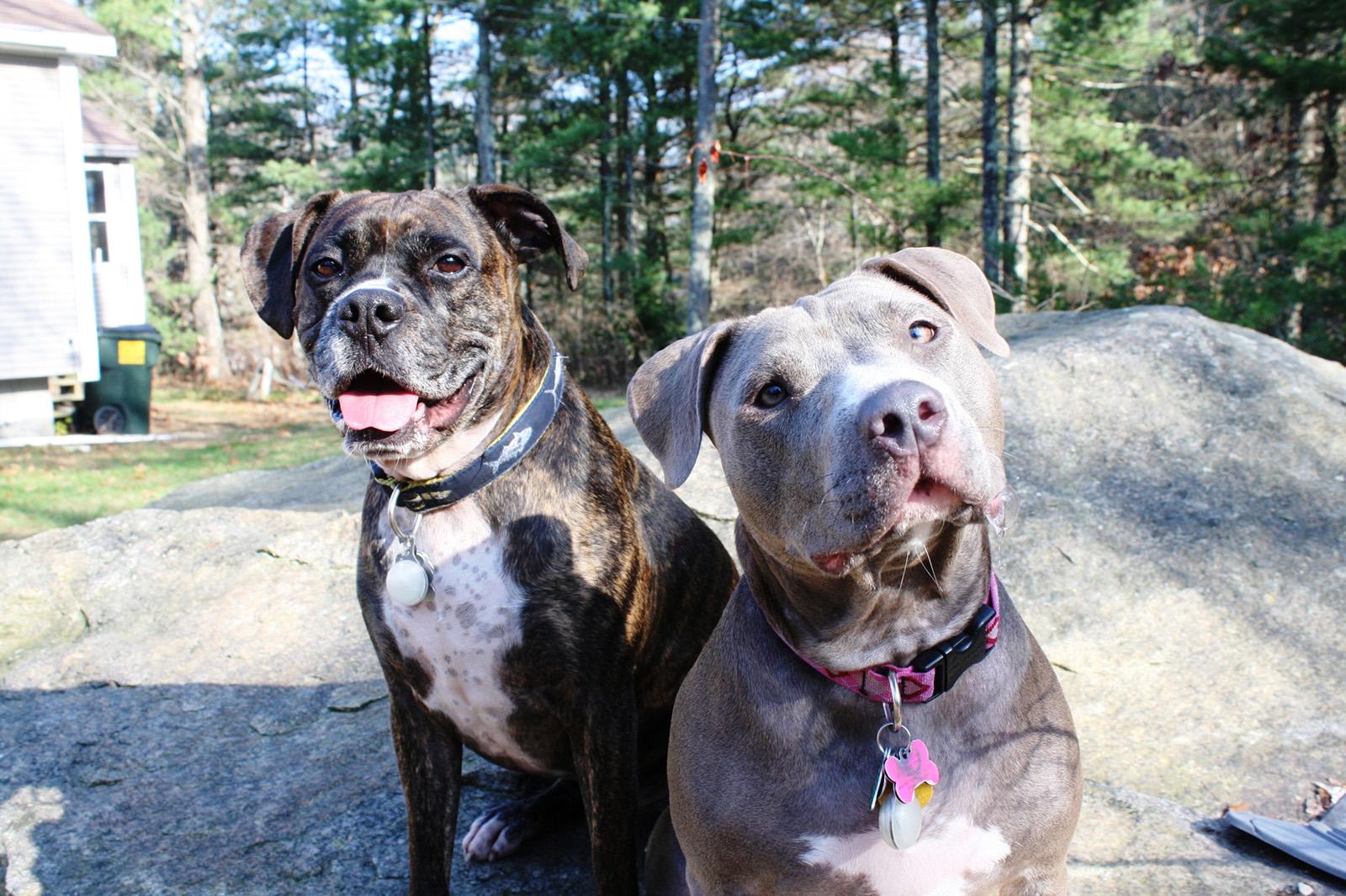 Одежда для собак средней породы