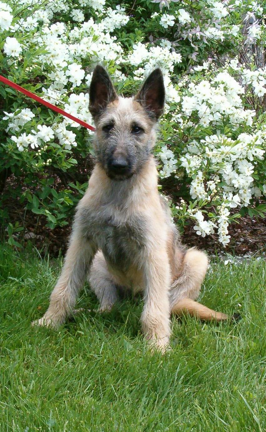 Клички лакенуа - имена для собак